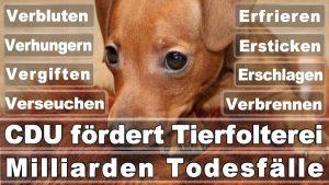 Wolf, Thomas Düsseldorf Bankstraße Christlich Demokratische Union Informatiker Düsseldorf Deutschlands (CDU)